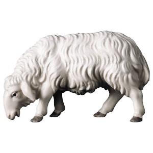 Schaf äsend der Hirtenkrippe